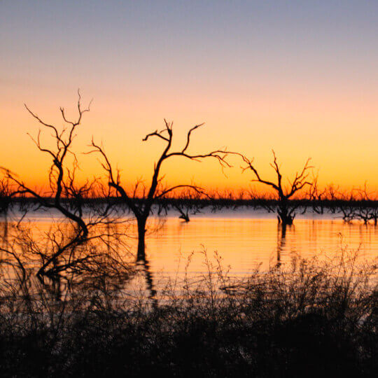 Research & Partnerships